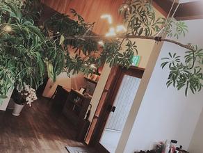 エンネの植物たち。