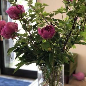 Amoにお花が・・・