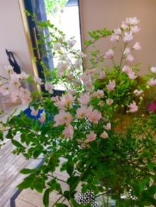 最近Amoにお花が。。。