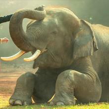 思わず象も全米も感涙⁉角質ケアで足裏をトゥルトゥルに!